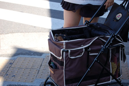 ドッグカーで散歩.jpg