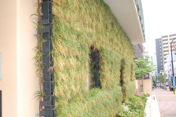 草の家-n.jpg