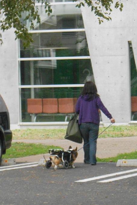 車いすの犬.jpg