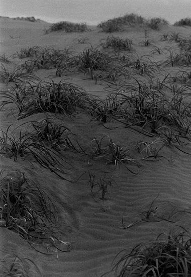 砂丘3.jpg