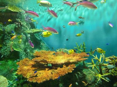 tropicalfish-n.jpg